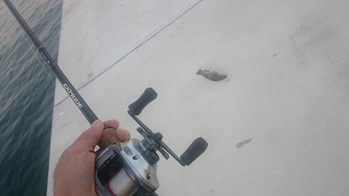 freedom-fishing170